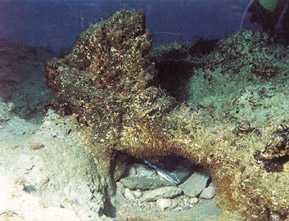 Los restos del barco griego hallado en Cala Sant Vicenç se exhibirán en Palma